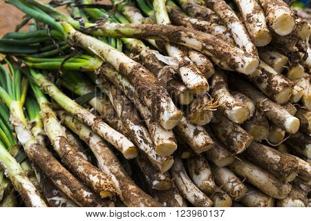 a pile of raw calcots, sweet onions typical of Catalonia, Spain, ready to be barbecued
