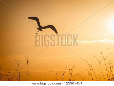 a crane in flight in silhouette during sunset