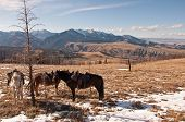 A view of the Gallatin National Forest and West Boulder river basin with horses in the foreground near McLeod Montana poster