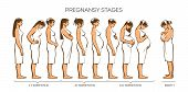 Stages of pregnancy. Vector image of stages of pregnancy. Pregnant woman. Motherhood. Trimester of pregnancy. Nine months of pregnancy. Image of different pregnant women. color illustrations poster