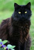 Black kitty staring at you. :-) poster
