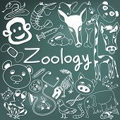 Zoology biology doodle handwriting icons of animal species and education tools in blackboard background for science presentation or subject title create by vector poster
