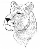 Vector lioness represented in the form of a tattoo poster