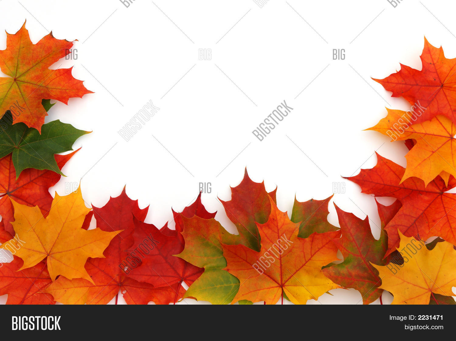 Colorful Maple Leaf Image & Photo (Free Trial) | Bigstock