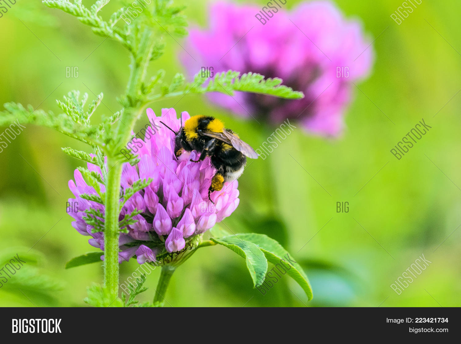 Bumblebee Basket Image Photo Free Trial Bigstock