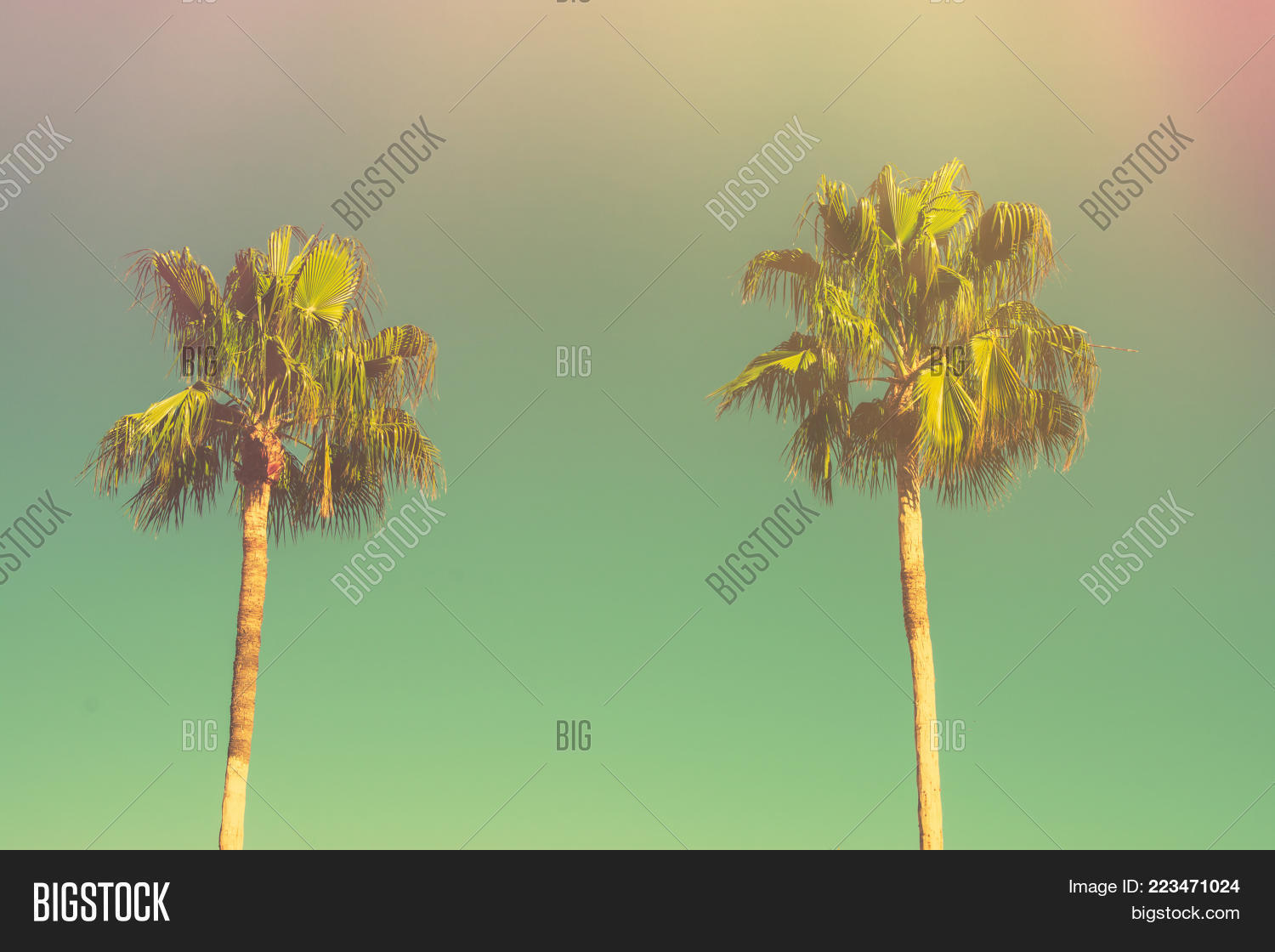 Two Palm Trees On Image & Photo (Free Trial) | Bigstock