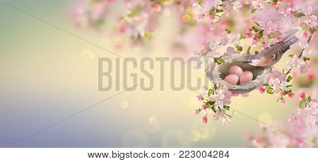 Vector background with spring apple blossom. Blossoming branch in springtime with the nest and bird. Happy Mother's day banner