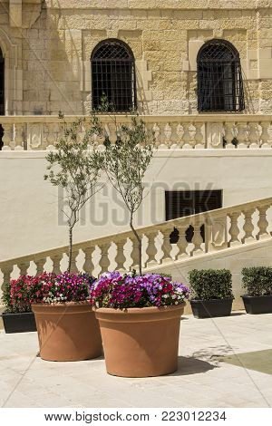 The Cathedral of the Assumption is a Roman Catholic cathedral in the Cittadella of Victoria in Gozo, Malta. Fresh flowers and olive trees decorating the staircase in front of the church