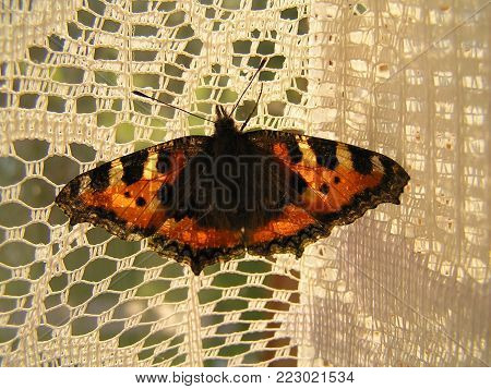 This butterfly is called tortoise butterfly, or urticaria, or Aglais urticae in Latin