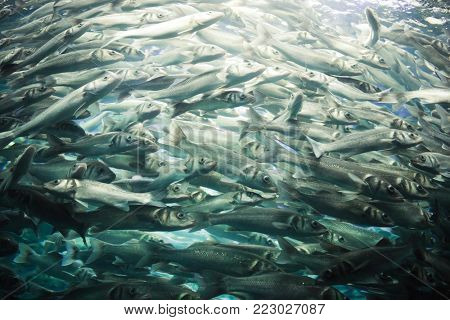 shool of fish in aquarium