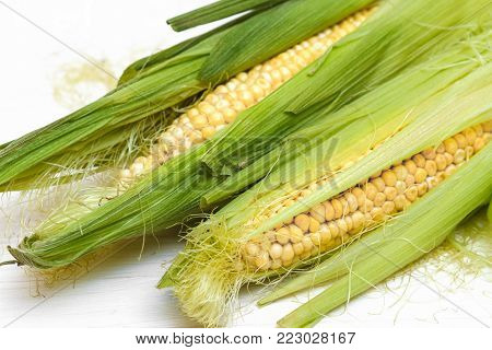 two green Corn Cob Husks on a white background