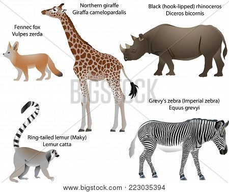 Collection of animals living in the territory of Africa: northern giraffe, black rhinoceros, Grevy's zebra, ring-tailed lemur, fennec fox