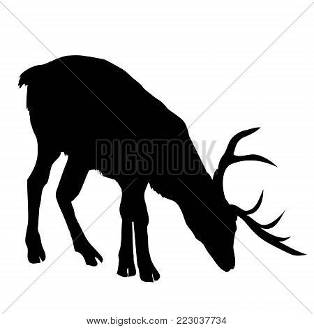 Beautiful noble proud sika deer are ruminant mammal in family Cervidae. Dark ink hand drawn picture sketchy in art retro style pen on paper with space for text, silhouette, stag, vector, antler, head, illustration, large, animal, black, nature, wildlife,