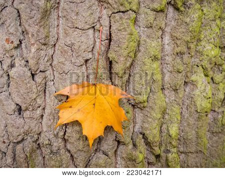 leaf and tree in autumn