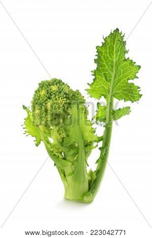 Fresh turnip tops isolated on white background