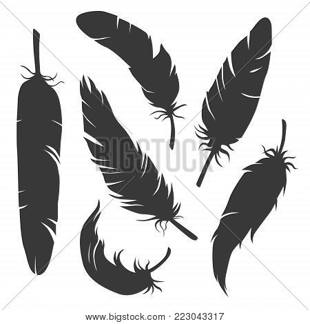 Set of vector elegant feather silhouettes isolated on white background