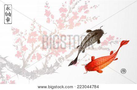 Black and red koi carps on sakura blossom background. Traditional oriental ink painting sumi-e, u-sin, go-hua. Contains hieroglyphs - eternity, freedom, happiness, joy