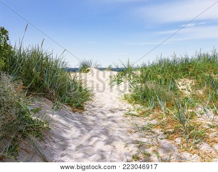A narrow sandy pathway among the juicy green grass to the shore of the Baltic Sea on a clear sunny day. Curonian Spit. Kaliningrad region, Russia