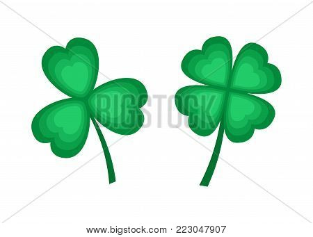 Green leaves of clover on white background