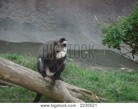 Monkey On A Log