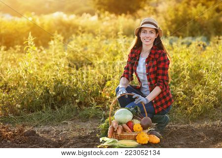 Gardener with freshly harvested vegetables in garden with sunshine. Happy woman farmer and basket with crop. Gardening, agriculture, autumn good harvest concept. Copy space