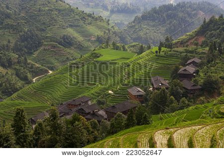 Beautiful view of the Longsheng Rice Terraces near the of the Dazhai village in the province of Guangxi, in China; Concept for travel in China and beutiful and serene landscape
