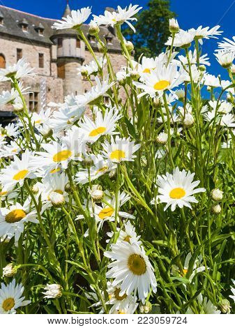 PLOEZAL, FRANCE - JULY 3, 2010: many daisy flowers and view of medieval castle Chateau de la Roche-Jagu in Cotes-d'Armor department of Brittany in sunny summer day. The castle was built in 1418.