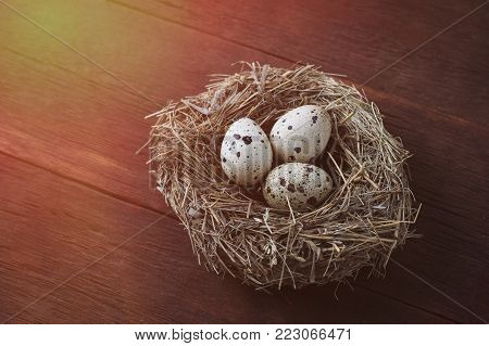 Quail Eggs In A Nest On A Dark Brown Wooden Background. Added Highlight Effect