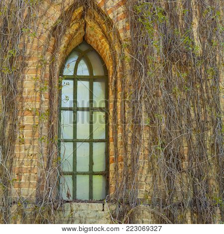 Window in an old brick building, covered with ivy. Shot made in reservation (national park) Askania Nova, Ukraine