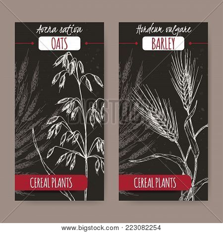 Set of two labels with Barley aka Hordeum vulgare, oats aka Avena sativa sketch on black. Cereal plants collection. Great for bakery, agriculture, farming design.