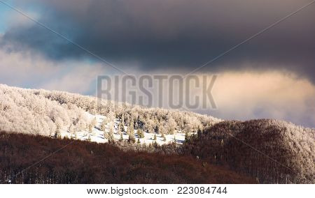 snowy meadow among the forest on top of a hill. lovely winter scenery in mountains on a cloudy day