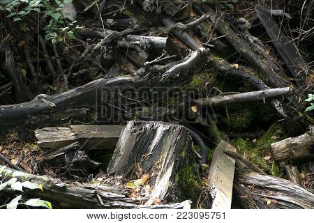 a thick forest of black and white rubble