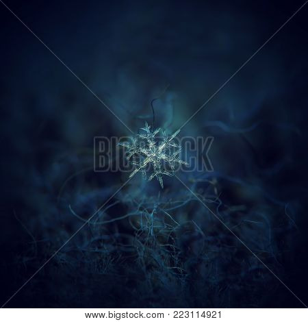 Snowflake glowing on dark blue textured background. Macro photo of real snow crystal: stellar dendrite snowflake with thin, transparent arms, elegant shape and complex hexagonal structure.