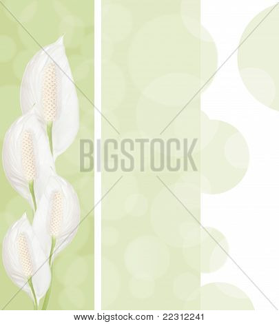 Spathiphyllum Flowers Background