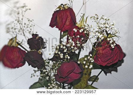 A bouquet of withered red roses on the background of a frozen window