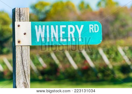 Closeup of Winery Road Green street sign with bokeh background of grape vineyard winery rows