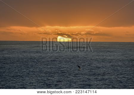 Sunset looking out of Poipou beach Kauai Hawaii as a dolphin jumps out of the water.