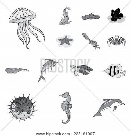 A variety of marine animals monochrome icons in set collection for design. Fish and shellfish vector symbol stock  illustration.