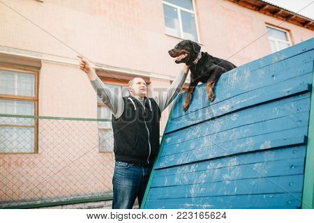Cynologist training working dog on playground