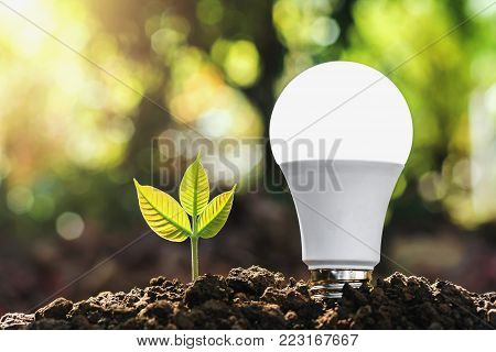 concept energy saving lightbulb with plant growing and sunshine in nature