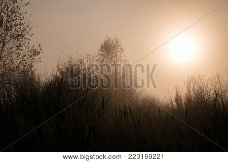 Fog in the autumn forest. In the foreground dry grass. Behind the trees with fallen leaves. In the background the sky with a big sun shining through the fog.