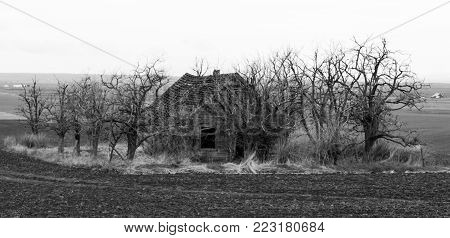 Black and white spooky house surrounded by dead trees