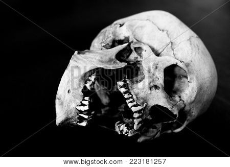 Fiberglass human skull on it's side with mouth open.