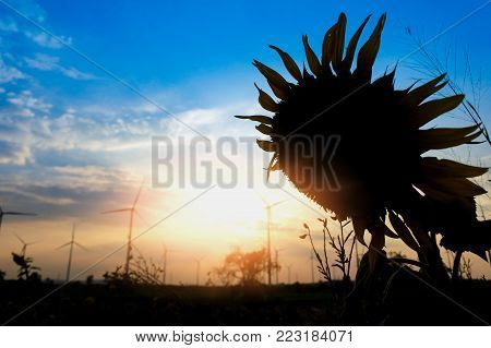 Wind turbine With the front is the silhouette of the sunflower flower. Renewable Energy Concepts and Energy Worlds