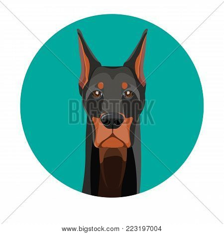 Snout of noble doberman dog with dark smooth fur and straight ears portrait inside turquoise circle isolated cartoon vector illustration on white background.