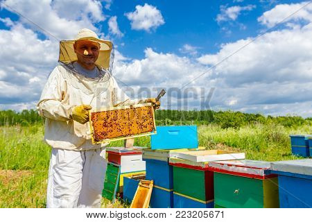 Beekeeper is happy with situation in bee colony, holding closed honeycomb full with honey on wooden frame.