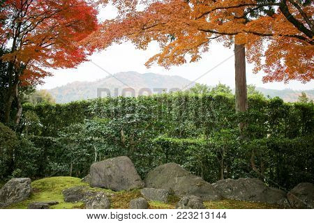 Shinsho Gokuraku Ji Garden At Fall Kyoto