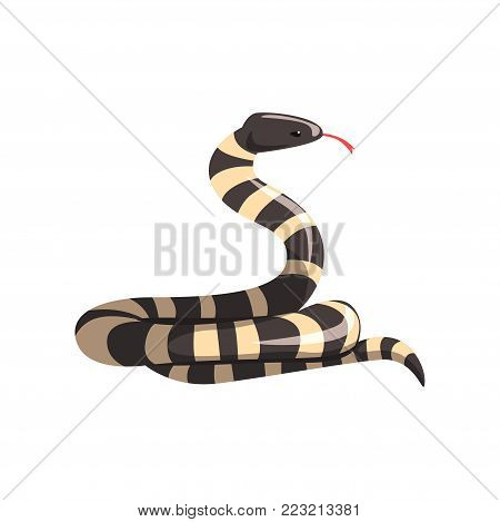 California king snake with black and white bands. Cartoon large reptile with tongue out. Colorful wild serpent. Non-venomous creature. Wildlife concept. Flat vector design isolated on white background