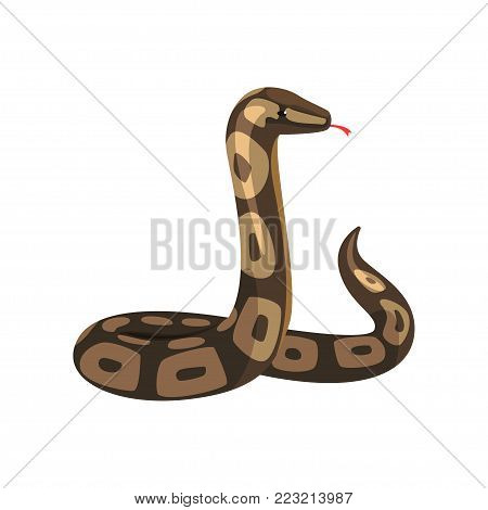 Tropical python pythonidae with tongue out. Large non-venomous dark-colored royal snake. Wild serpent. Exotic pet. Wildlife concept. Cartoon flat vector illustration isolated on white background.