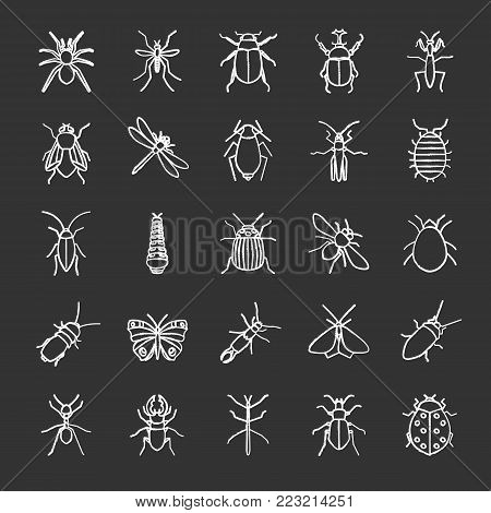 Insects chalk icons set. Bugs. Entomologist collection. Butterfly, earwig, stag bug, phasmid, moth, ant, mantis, spider. Isolated vector chalkboard illustrations